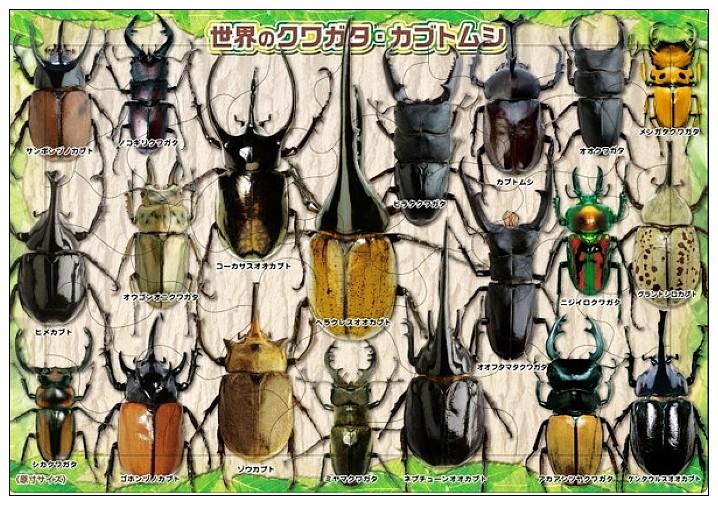 內頁放大:32pcs世界各地獨角仙 鍬形蟲:日本幼兒紙板拼圖