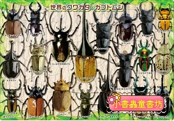 32pcs世界各地獨角仙 鍬形蟲:日本幼兒紙板拼圖