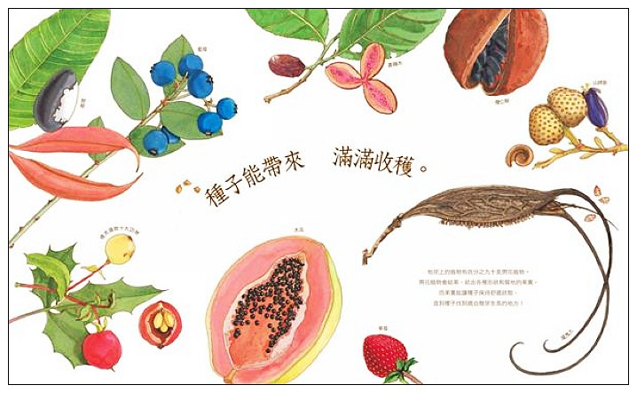 內頁放大:沉睡中的種子<親近植物繪本>(9折)