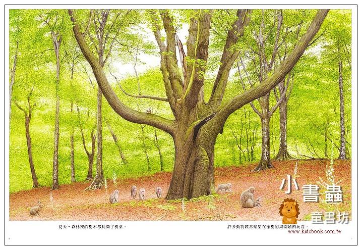 內頁放大:森林裡的橡樹 <親近植物繪本> (79折)