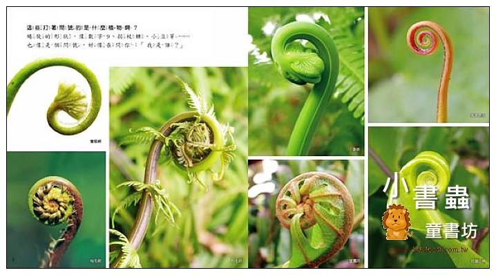 內頁放大:蕨類王國 <親近植物繪本(85折)