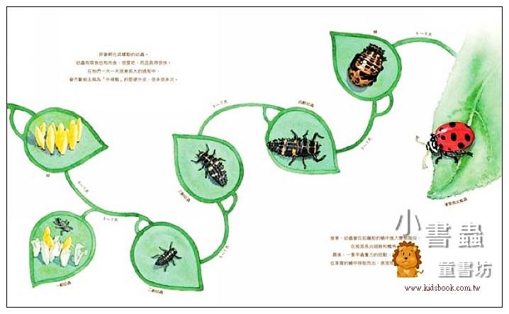 內頁放大:害羞的甲蟲 (9折)