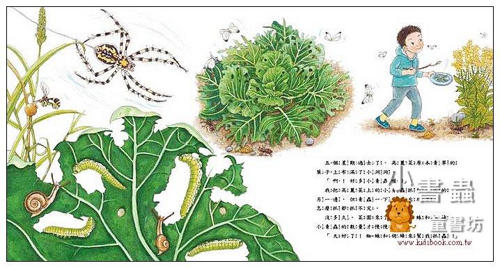 內頁放大:我種了高麗菜 <親近植物繪本> (85折)