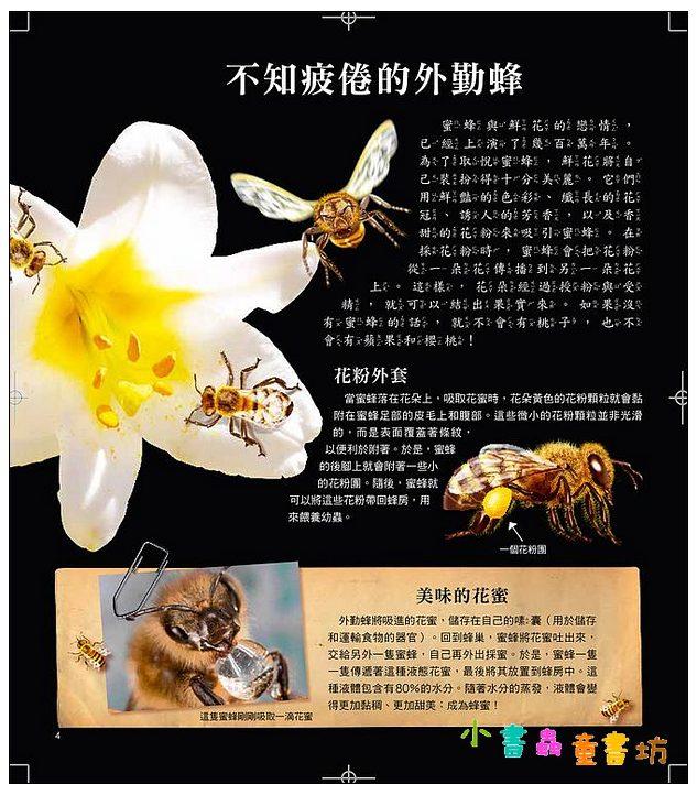 內頁放大:驚奇立體酷百科: 透視小小昆蟲世界 現貨:1