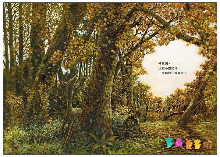 內頁放大:木之繪本: 拜訪森林 <親近植物繪本> (85折)