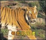 老虎的花紋:大科學
