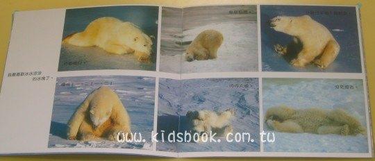 內頁放大:白雪北極熊:*大科學 (第二十五期) (導讀手冊+導讀CD) (特價書)