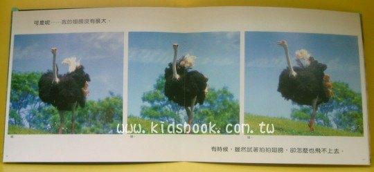 內頁放大:大鴕鳥(套書解套):*大科學 (第四十九期) (導讀手冊+導讀CD) (特價書)