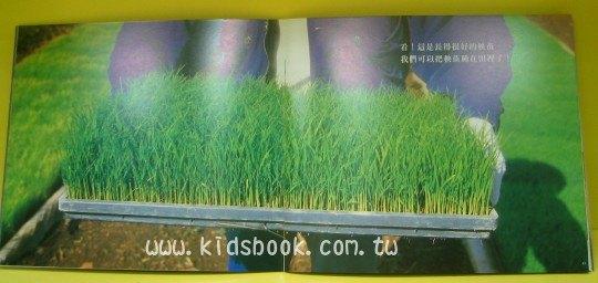 內頁放大:稻米長大了:大科學