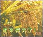 稻米長大了:大科學