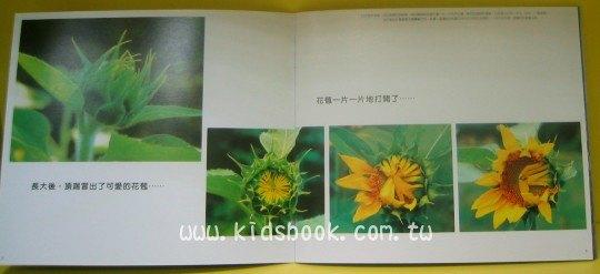 內頁放大:向日葵的祕密:*大科學 (第四十一期) (導讀手冊+導讀CD)<親近植物繪本>