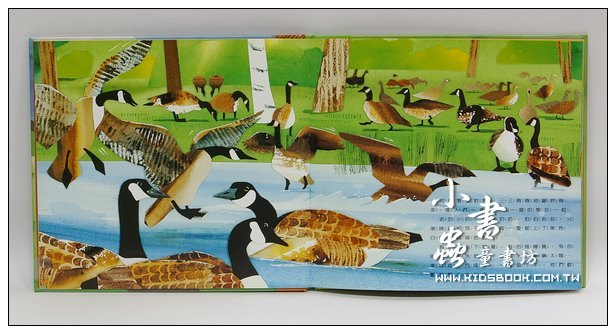 內頁放大:環保繪本(中階)野雁的故事(現貨數量:4)(絕版書)