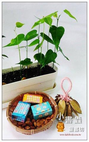 愛心樹(水黃皮)種子材料包 (免費贈送品)~