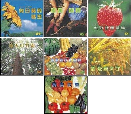 內頁放大:蔬果花兒 7合1:大科學