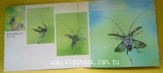 內頁放大:飛啊!蟲蟲小飛俠:*大科學 (第十八期) (導讀手冊+導讀CD) (特價書)