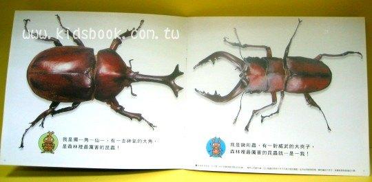 內頁放大:獨角仙和鍬形蟲:大科學