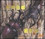 獨角仙和鍬形蟲:大科學