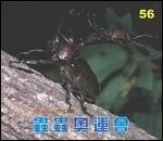 蟲蟲奧運會:大科學