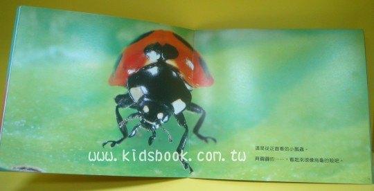 內頁放大:小小瓢蟲爬呀爬:*大科學 (導讀手冊+導讀CD) (特價書)
