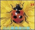小小瓢蟲爬呀爬:*大科學 (導讀手冊+導讀CD) (特價書)
