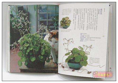 內頁放大:野草盆栽