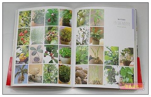 內頁放大:種子變盆栽真簡單:30種只要澆水不用施肥的室內植物 <親近植物繪本>