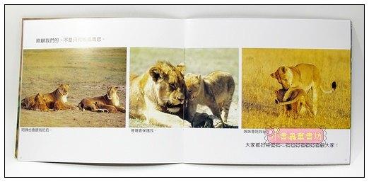 內頁放大:獅子家族 (套書解套):*大科學 (第四十五期) (導讀手冊+導讀CD) (特價書)