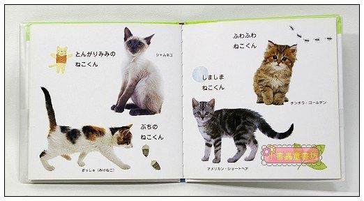 內頁放大:幼幼認知學習書:小貓(日文版,附中文翻譯)