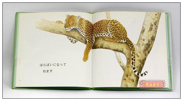 內頁放大:你怎麼睡覺的呢?:動物幼幼繪本(日文版,附中文翻譯)