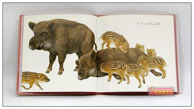 內頁放大:這是誰的寶寶 ?:動物幼幼繪本(日文版,附中文翻譯)