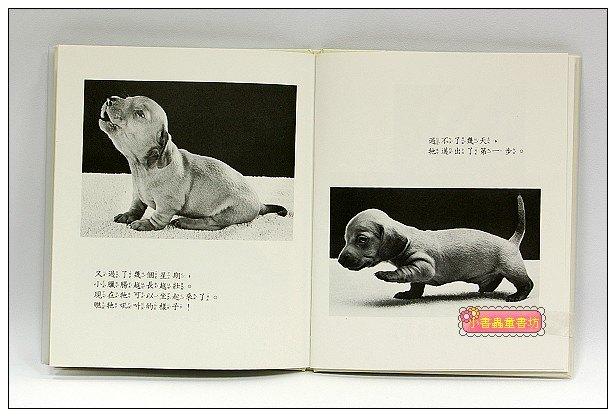 內頁放大:小狗出生了(85折)