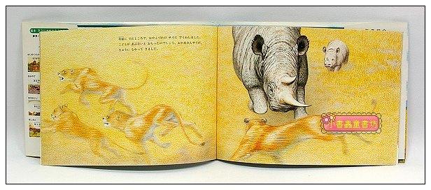 內頁放大:非洲動物繪本(獅子系列2):狩獵訓練(絕版)(日文) (附中文翻譯)