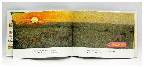 內頁放大:非洲動物繪本(獅子系列3):禮物(絕版)(日文) (附中文翻譯)