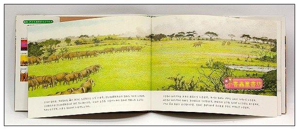 內頁放大:非洲動物繪本(大象系列5):枯枝(絕版)(日文) (附中文翻譯)