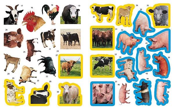內頁放大:圖鑑貼紙遊戲書:1000 ANIMAL STICKERS