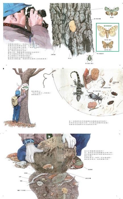 內頁放大:漫步自然繪本:尋找冬天的昆蟲